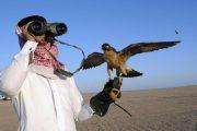 مندوبية المياه والغابات تنفي اتهامات البوليساريو حول القنص في الصحراء