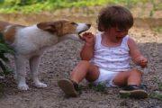 أكادير..كلبة تقتل طفلة أرادت اللعب مع جروها