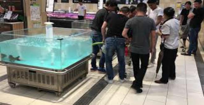 فيديو طريف .. سمكة تقفز في عربة التسوق