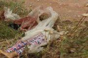 الإعدام لقاتل شابة قطع جثتها بمنشار