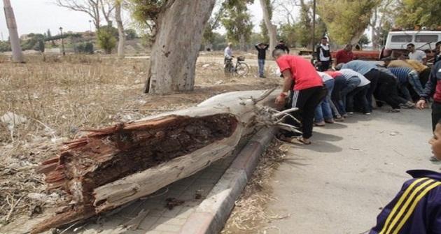 إصابة 8 مصلين إثر سقوط شجرة بسلا الجديدة