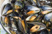 وزارة الفلاحة والصيد البحري تمنع جمع وتسويق الصدفيات ضواحي أكادير