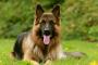 كلب يقظ ينقذ عائلة من موت محتم