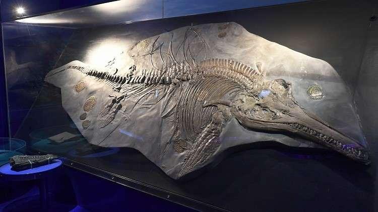علماء يعثرون على بقايا أضخم الحيوانات المنقرضة