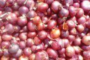 الأولى بالمملكة.. المغرب وهولندا يعتزمان تشييد وحدة لتخزين البصل
