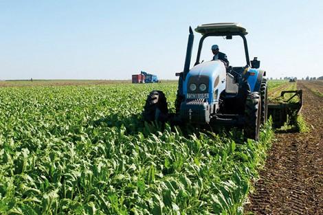 وزارة الفلاحة تطمئن المغاربة حول الزراعات الربيعية والصيفية