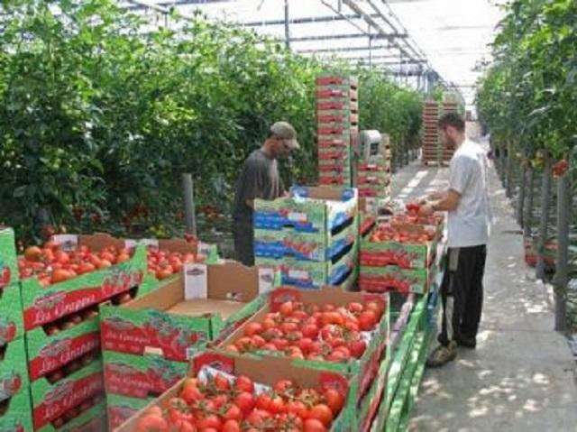 المغرب يعزز مكانه كأول مصدر للخضر والفواكه لإسبانيا
