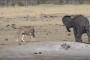 بالفيديو.. نهاية مؤلمة لصغير فيل