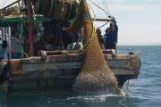 بحارة يحذرون من استعمال المتفجرات لصيد السمك بسواحل شفشاون