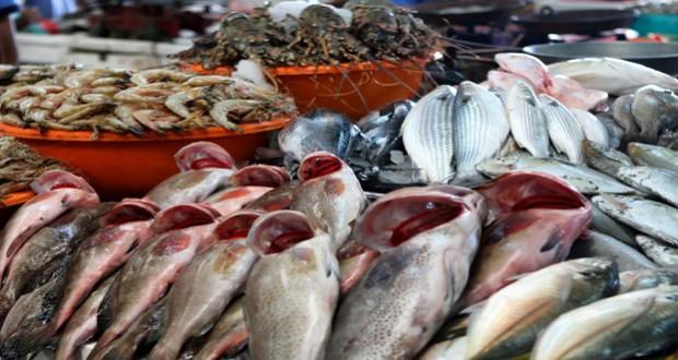 البحرية الملكية تشن حملة للتصدي لشبكات تهريب السمك نحو أوروبا
