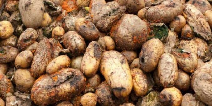 مراكش.. حجز أكثر من 8 أطنان من البطاطس الفاسدة المعدة للقلي بالمطاعم
