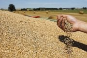 وزارة الفلاحة تحدد السعر المرجعي للقمح وتعلن عن منح جزافية للفلاحين