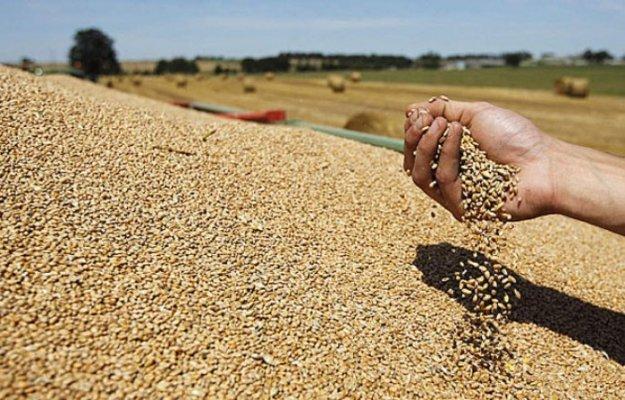 رسميا.. الحكومة ترفع الرسوم على استيراد القمح الطري ومشتقاته