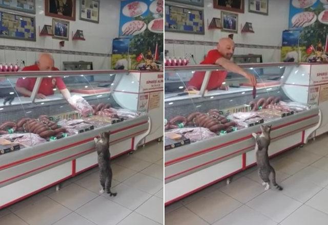 بالفيديو.. عندما زار القط محل جزارة ولكن كعميل!