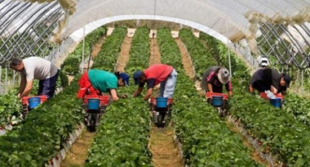 وزارة الشغل تنفي تعرض عاملات الفراولة بإسبانيا لأي مضايقات