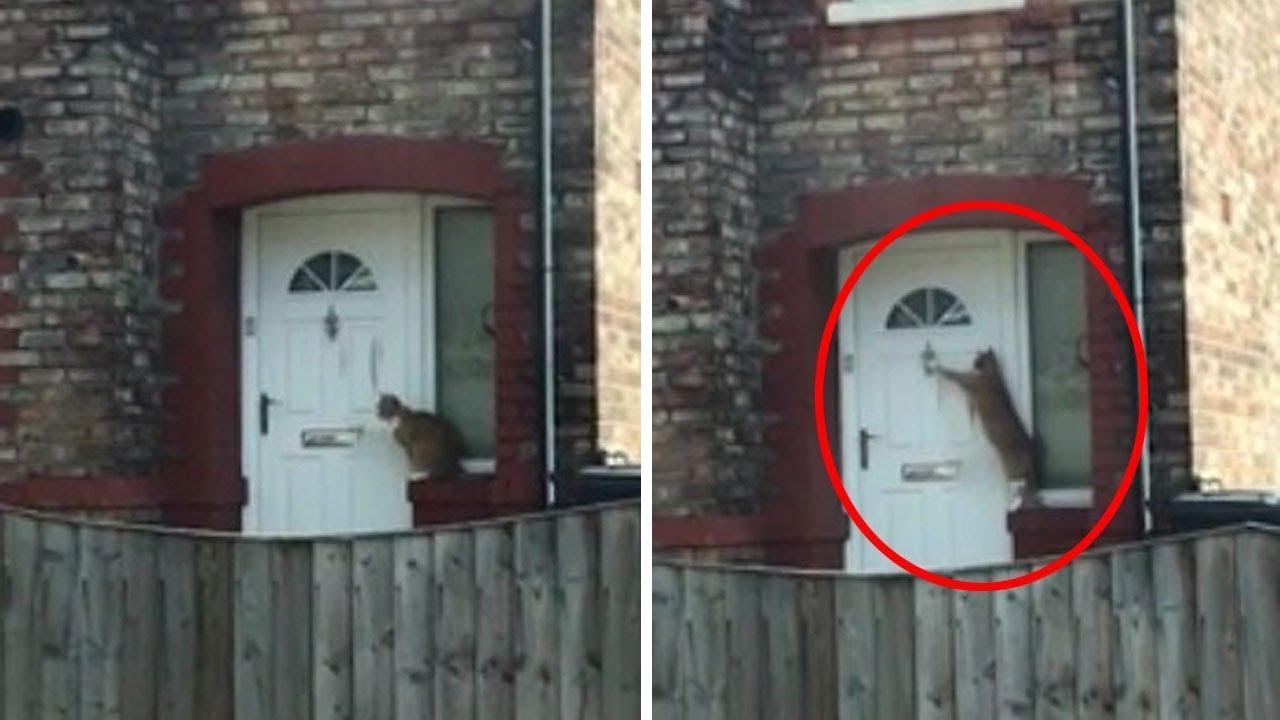 فيديو طريف.. شاهد القطة الأكثر تهذيبا في العالم !