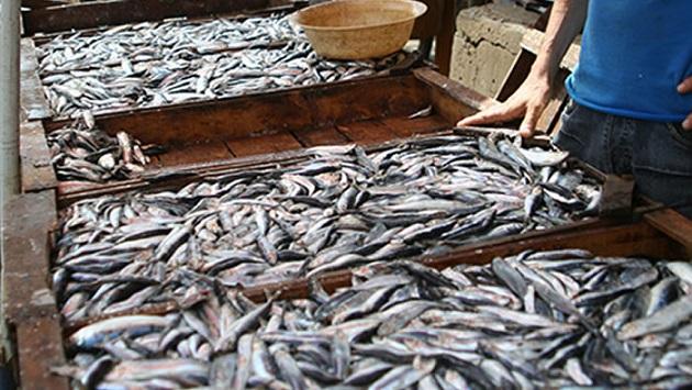 سلطات تطوان تدخل على خط واقعة إتلاف السمك بسوق بني حسان