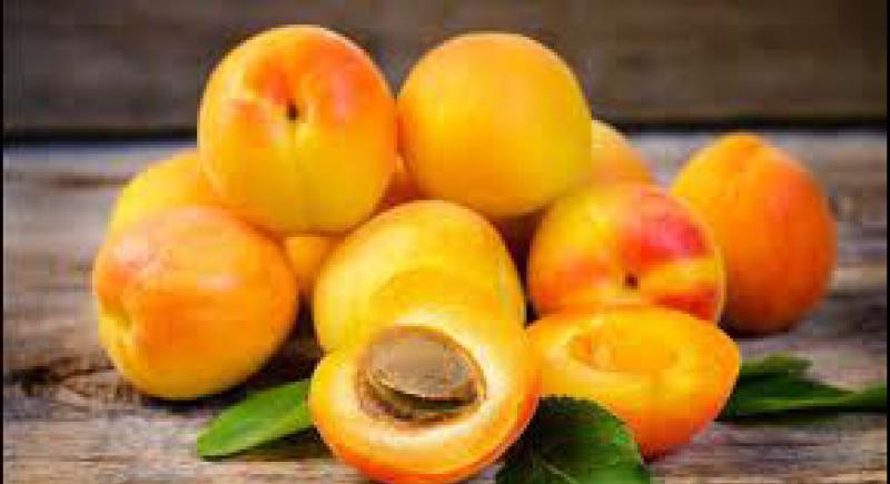 فاكهة المشمش.. كنز غذائي