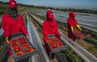 ملف ''عاملات الفراولة''.. الخلفي: نتابع الوضع ومستعدون للتدخل والحماية