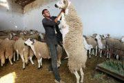 عيد الأضحى.. اجتماع رفيع لوضع التدابير المتعلقة بتسمين القطيع