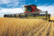 وزير الفلاحة: محصول الحبوب قياسي هذا العام بـ 103 ملايين قنطار