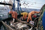 المغرب والاتحاد الأوروبي يوقعان بالرباط على الاتفاق الجديد للصيد البحري