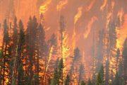 فرق الإطفاء تسابق الزمن لاخماد حرائق غابة الملالين بالمضيق