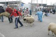 عكس سبتة المحتلة.. مغاربة مليلية السليبة سيحتفلون بعيد الأضحى