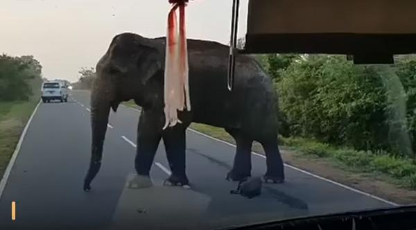 بالفيديو.. فيل جائع يوقف حافلة بقوة للحصول على الموز
