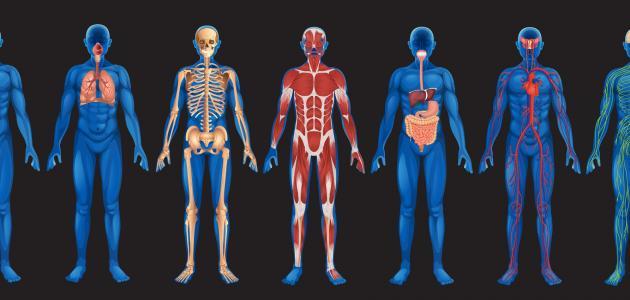 لأول مرة.. اكتشاف عضو جديد في جسم الانسان