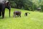 فيديو طريف.. فيل صغير يقلد البشر في التزحلق على العشب الرطب