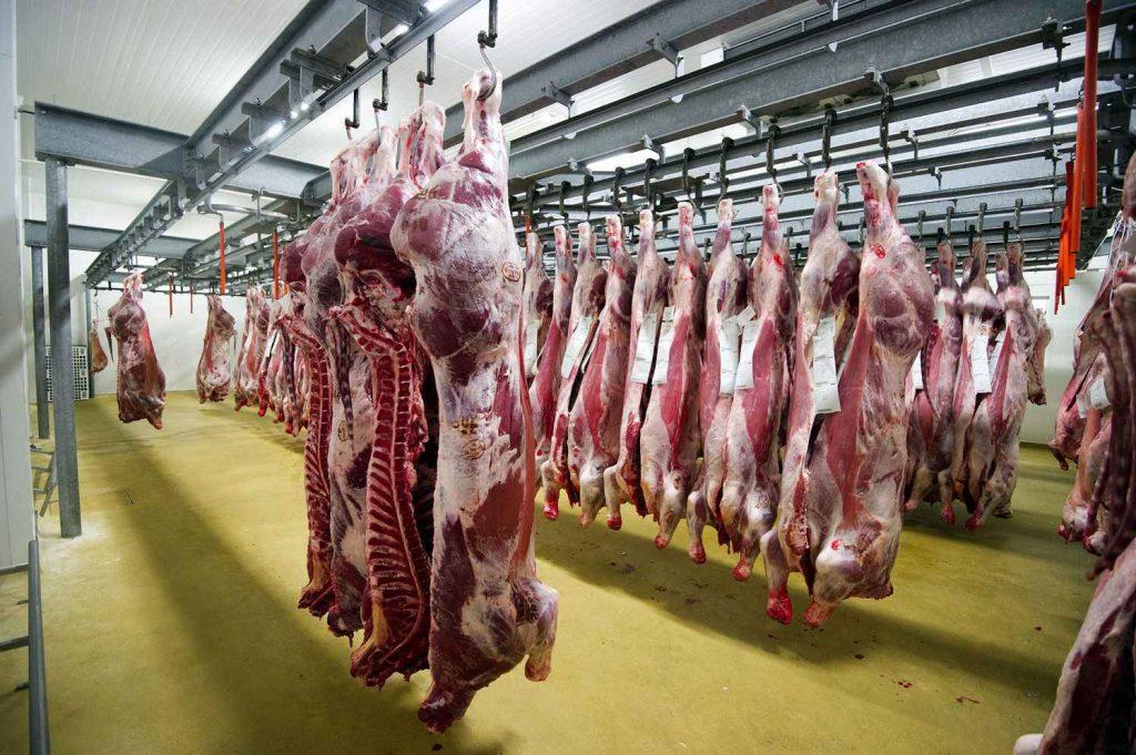 جطو يكشف اختلالات كبرى في نقل اللحوم وأخنوش يقر بها