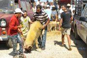 الصندوق المهني المغربي للتقاعد يصرف المعاشات قبيل عيد الأضحى