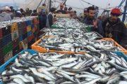 إثر انهيار أسعاره.. صيادون يعيدون