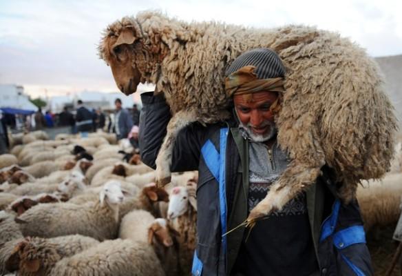 عيد الأضحى.. العرض المرتقب من الأغنام والماعز بلغ 8,1 مليون رأس