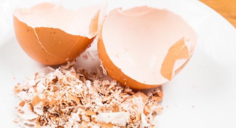 لصحة أفضل.. تناول قشور البيض!