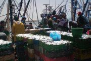 وفد برلماني أوروبي بالداخلة لمعاينة فوائد اتفاق الصيد على الأقاليم الجنوبية