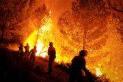 مندوبية الغابات: انخفاض عدد الحرائق والمساحات المتضررة سنة 2018