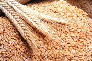 هذا ما قررته الحكومة بخصوص استيراد القمح اللين ومشتقاته