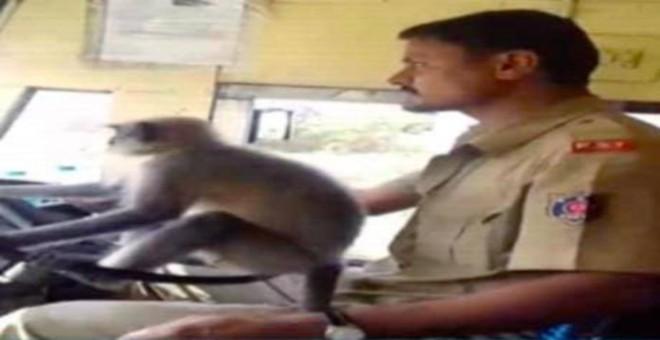 بالفيديو... قرد يقود حافلة ركاب يشعل مواقع التواصل