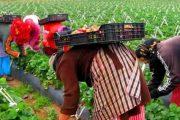 دعوات حقوقية لوزارة يتيم لحماية العاملات المغربيات بالخارج