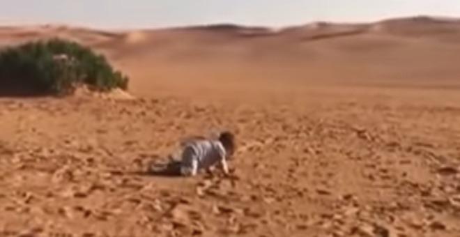 بالفيديو.. عائلة تترك طفلها وحيدا في البر تثير ضجة