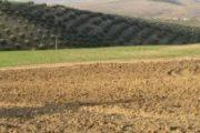 الداخلية تعمل على وضع خطة لتدبير الأراضي الجماعية