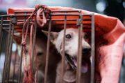 ملف عصابة ''لحوم الكلاب''.. تأجيل أولى الجلسات وحضور مكثف لأسر المتابعين