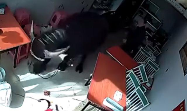 بالفيديو... ثور هائج يهجم على امرأة في مطعم