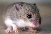 محاربة فئران وحشرات البيضاء.. خطوة جديدة لتأمين المبيدات قريبا