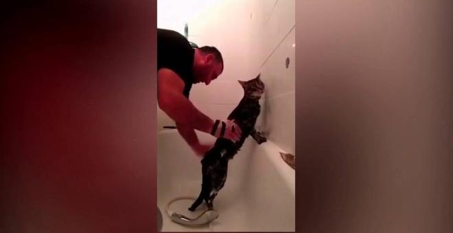 بالفيديو... قط