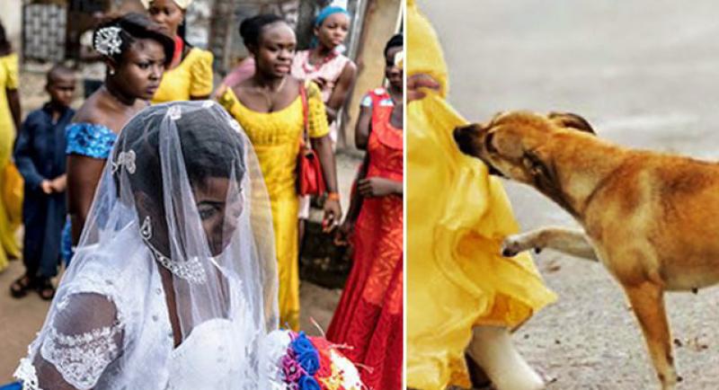 كلب يحبط محاولة إنتحارية خلال حفل زفاف