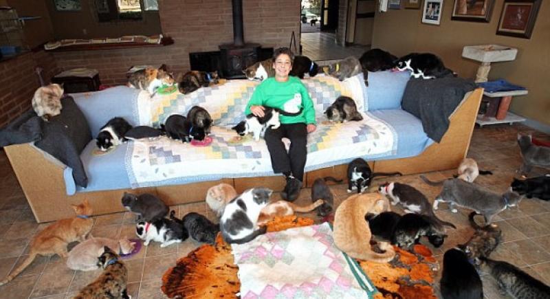 المرأة التي تنازلت عن قصرها لآلاف القطط