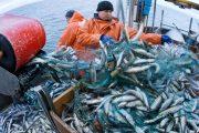 إسبانيا تأمل في أن يتم المصادقة على اتفاق الصيد بين المغرب وأوروبا